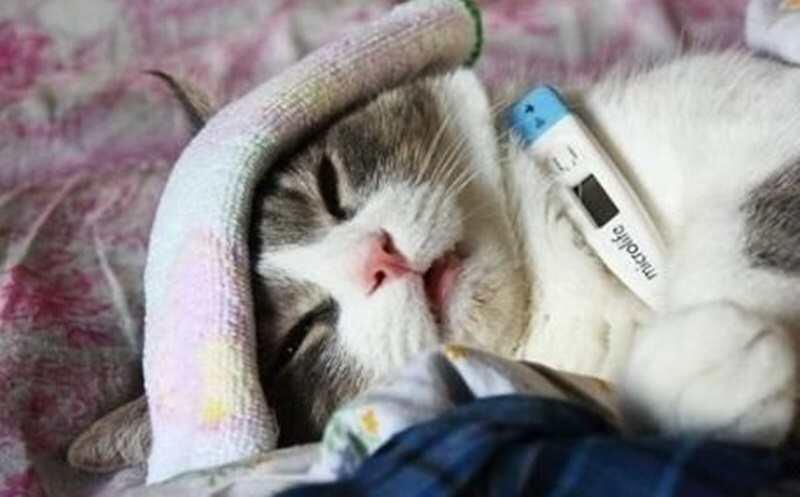 Kemampuan Yang Luar Biasa di Balik Wajah Manis dan Menggemaskan si Kucing