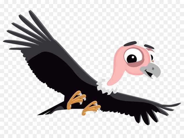 Burung Bangkai Condor Andes Penguasa Amerika Selatan