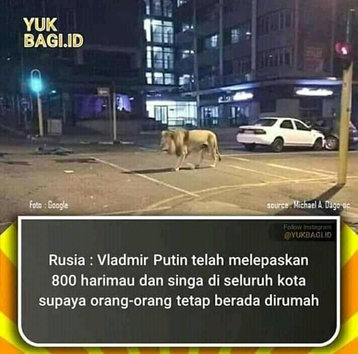 Presiden Rusia Lepas 800 Singa Agar Warga Tetap Dirumah? Ternyata Ini Faktanya