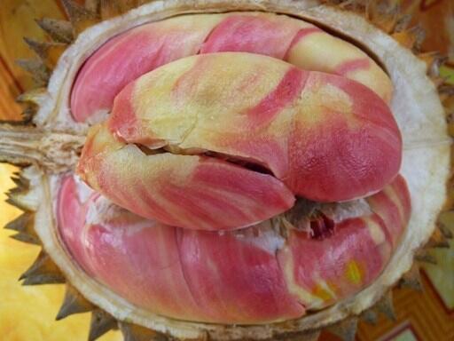 Jenis-jenis Durian yang Hits di Indonesia, Yummy!