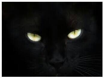 Misteri Lintasan Kucing Gila
