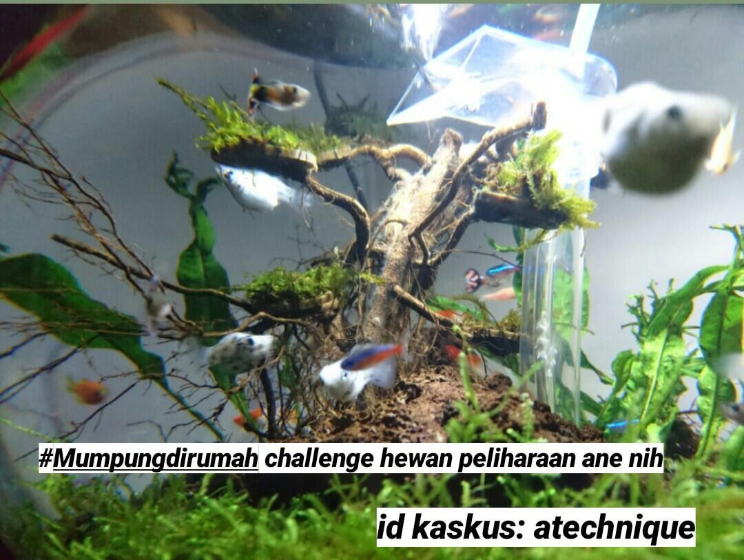 Yang Punya Peliharaan, Mari Gabung di #Mumpungdirumah Challenge Vol. 7