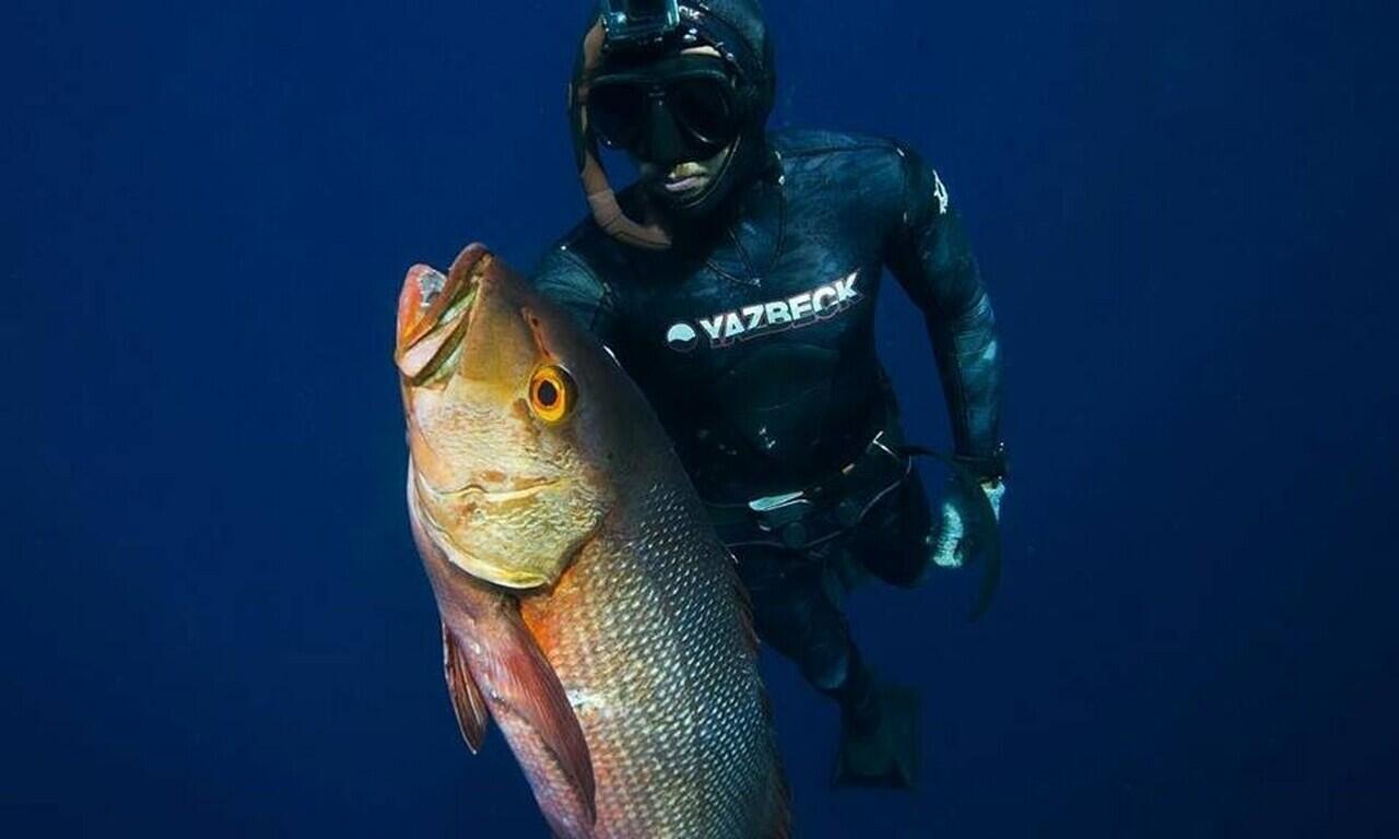 Mengenal Spearfishing atau Menombak ikan di lautan