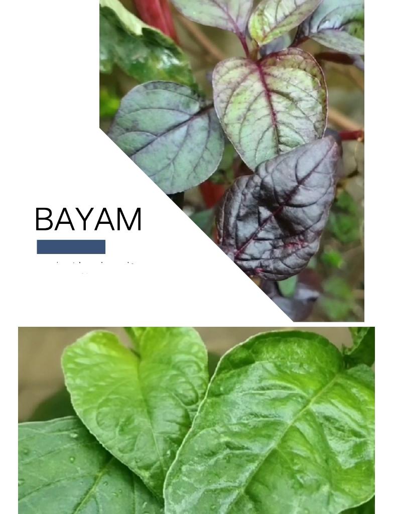 Mulai Hobi Berkebun Dengan 11 Tanaman Termudah Tumbuh. Tetap di Rumah, Ramadan Berkah