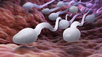 Wanita Inggris Klaim Minum Sperma untuk Cegah Corona