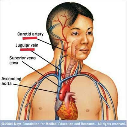 Anatomi MMA Part 2