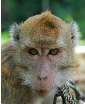 Hewan Sebagai Perlambang Watak Buruk yang Patut Dihindari
