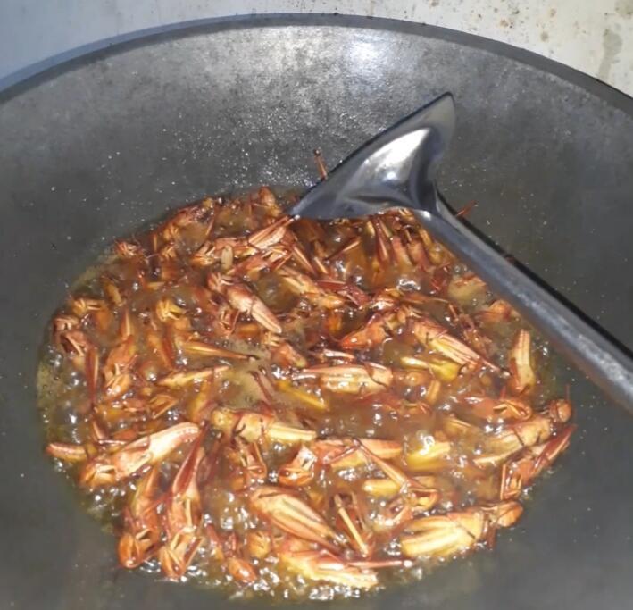 Serangga Ini Mengalahkan Harga Daging. Jangan Kaget Dengan Rasanya, Sangat Nikmat