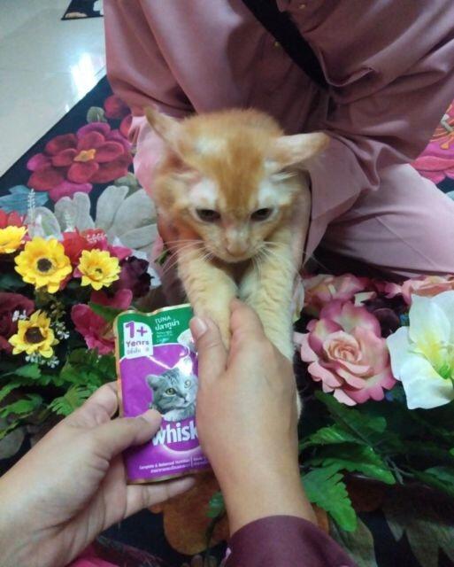 Kucing Aja Minta Maaf Pas Lebaran, Masa Kamu Nggak?
