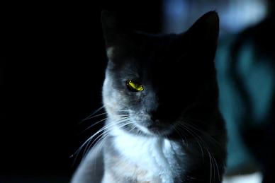 -Horror- #1 Cerita Horor Pendek Yang Membuat Kalian Susah Tidur