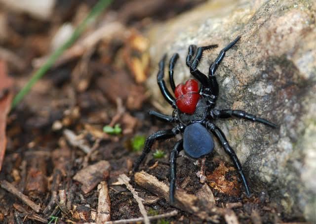 Inilah 5 Serangga Terlangka Didunia dan Tempat Dimana Bisa Menemukan Mereka
