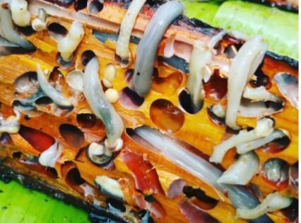 Ekstrim! Beberapa masakan khas Papua ini menguji adrenalin. Berani coba?