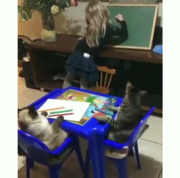 Menggemaskan! Dua Kucing ini Nurut sama jadi murid si Anak, Kok bisa?