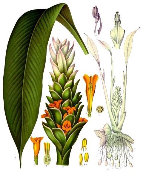 Bosan Makan Nasi Warna Putih? Tanaman Ini Bisa Ubah Warna Nasi Lebih Cantik