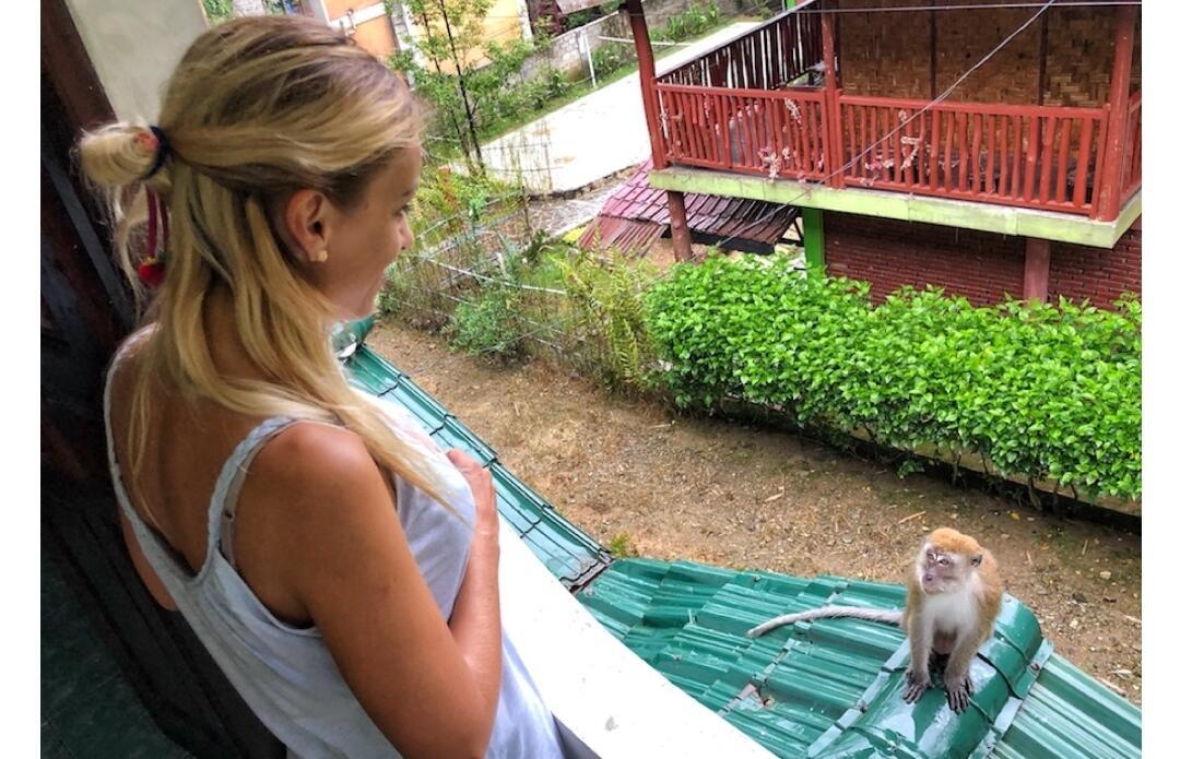Corona, Turis Wisman Terjebak di Indonesia, Ini yg Mereka Lakukan Di Hutan Sumatera