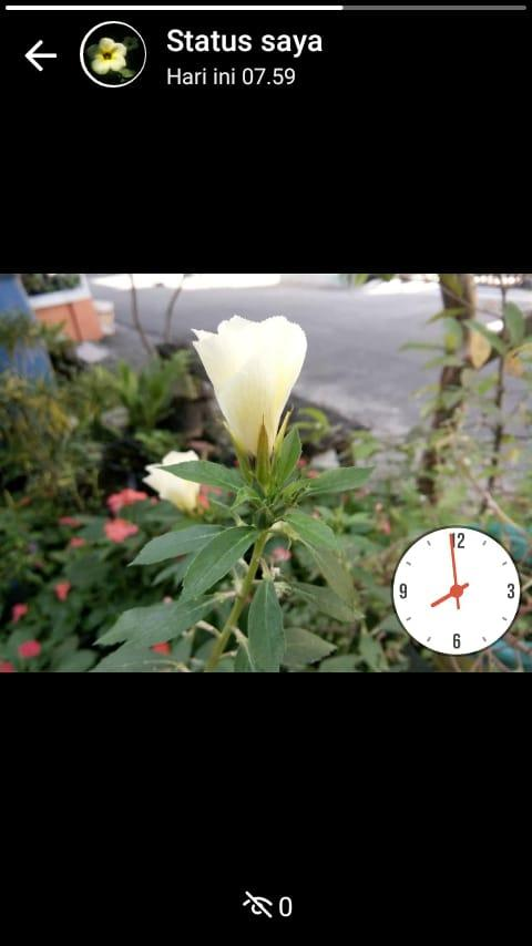 Bunga Pukul 8 Selain Cantik Ternyata Banyak Manfaatnya