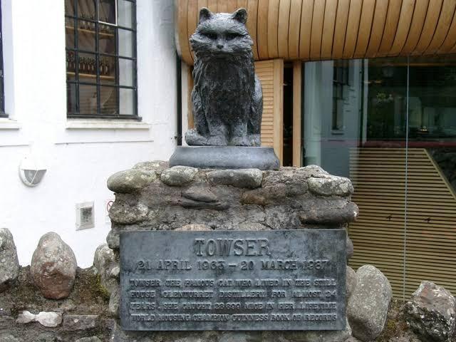 Towser Cat, Pemegang Rekor Dunia Si Penangkap Tikus Terbanyak
