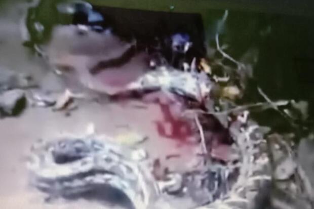 Warga Bombana Sulawesi Tenggara Tewas Dililit Piton Sepanjang 7 Meter