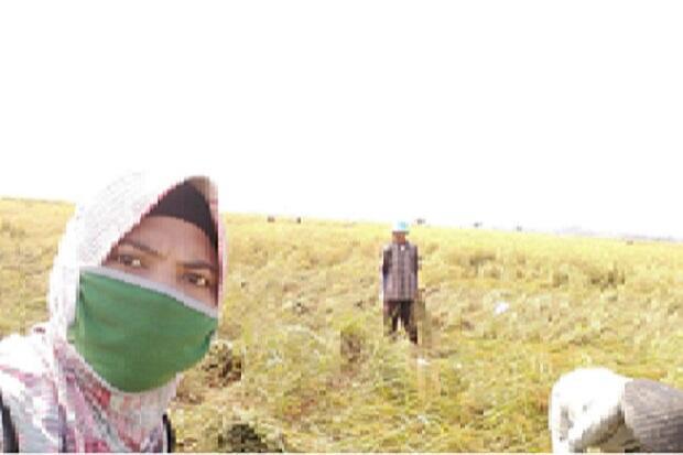 Penyuluh dan Petani di Karawang Pastikan Pertanian Tak Pernah Berhenti