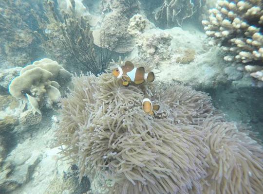 [COC Reg. Batam] Pulau Abang, Surga Bawah Laut Bagi Pecinta Snorkling Di Batam