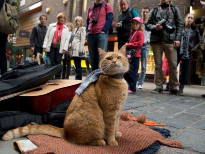 RIP Bob Trending di Twitter, Ini Kisah Kucing Oren yang Menginspirasi