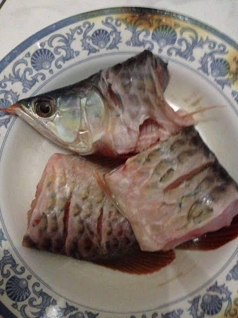 Ikan Arwana Kok Harganya Mahal, Padahal Enak Buat Digoreng