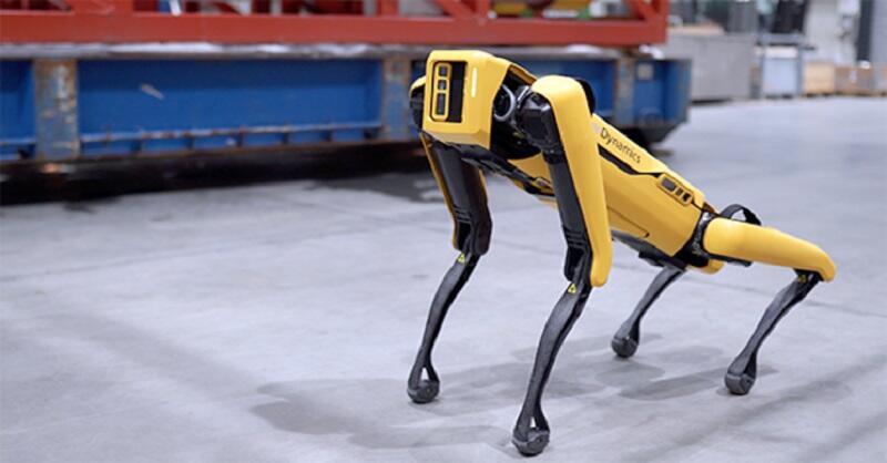 Kenalan yuk Ama Robot Anjing Pengembala Domba di Selandia Baru!