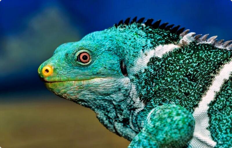 Ngerawat Reptil Awalnya Emang Susah, Biar Gampang Sini Ane Jabarin Tips & Triknya!