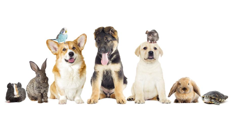 Kenali Hewan Peliharaanmu Lebih Jauh dengan Ikutan Kelas PETS #FestivalKelasKASKUS!