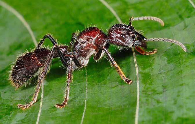 Seram juga ya, 8 Serangga ini Wajib kamu hindari kalau tidak ingin sial