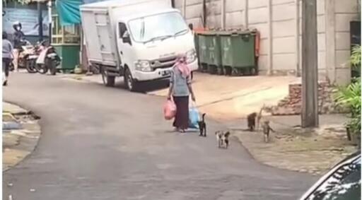 Kenapa Ibu Ini Selalu Diikuti Banyak Kucing Liar? Alasannya Bikin Terharu!