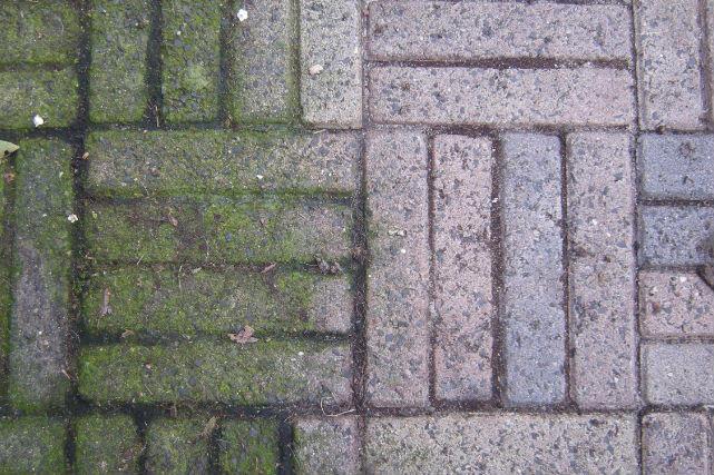 Trik membersihkan lumut/atau noda hijau pada ubin teras
