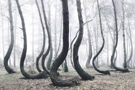 10 Hutan Angker di Dunia, Nomor 3 dan 2 Ada di Indonesia Loh guys