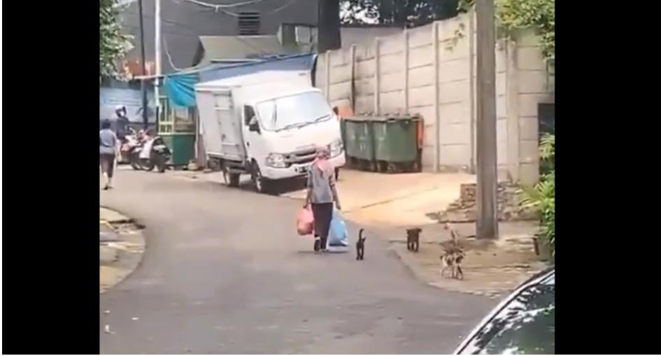 Viral! Kisah Wanita yang Dikerumuni Kucing Liar Setiap Hari