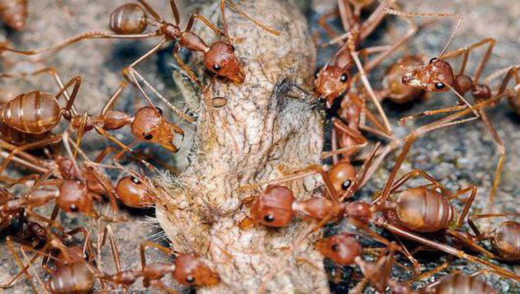 VIRAL : Fenomena Minyak Goreng Jadi Tempat 'BUNUH DIRI' Semut, Netizen Heran !