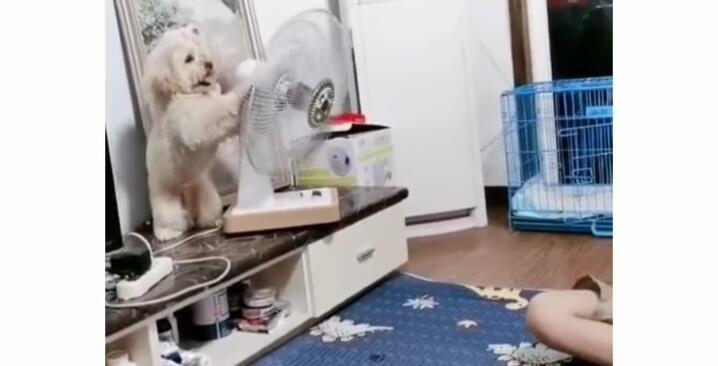 Lucu Menggemaskan, Anjing Ini Berhasil Buat Kagum Ratusan Ribu Netizen+62! Kok Bisa?
