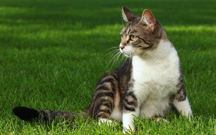 Sering Liat Kucing Mengubur Kotorannya Sendiri? Ternyata Begini Alasannya!
