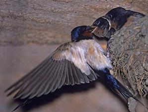 Burung Dan Pesan Kematian
