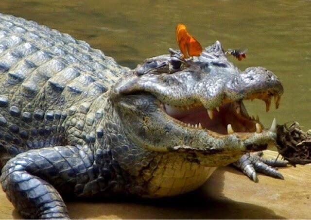 Binatang Dengan Cara Makan Yang Sangat Unik!