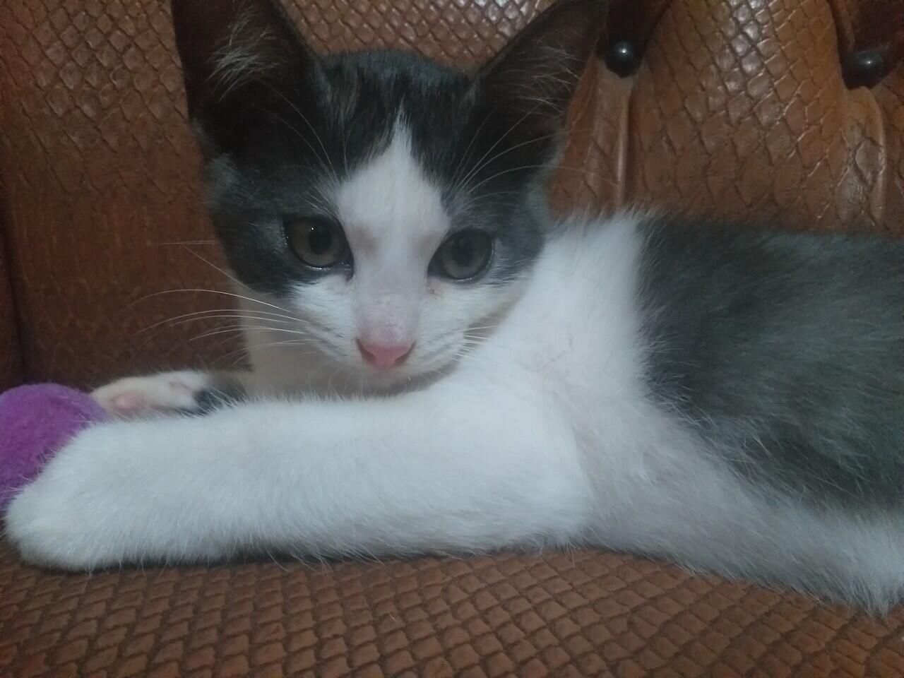 [Pengalaman Pribadi] Sterilisasi Kucing, Menurut Agan Perlu Nggak Sih ?