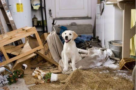 Empat Alasan Mengapa Sebaiknya Anjing Jantan Dikebiri