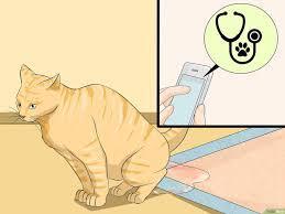 Kenapa Kotoran Kucing Baunya Menyengat?