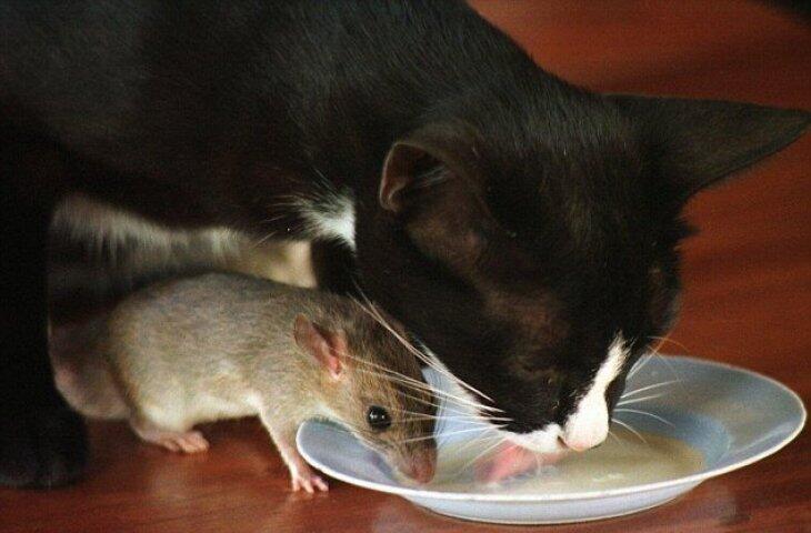 Kenapa Kucing Sekarang Tidak Makan Tikus