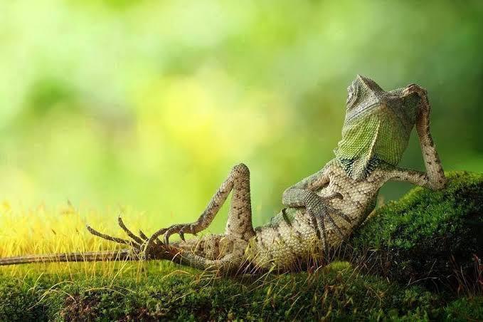 Hewan-hewan Ini Mampu Berkamuflase Secara Sempurna, Mana yang Lebih Hebat?