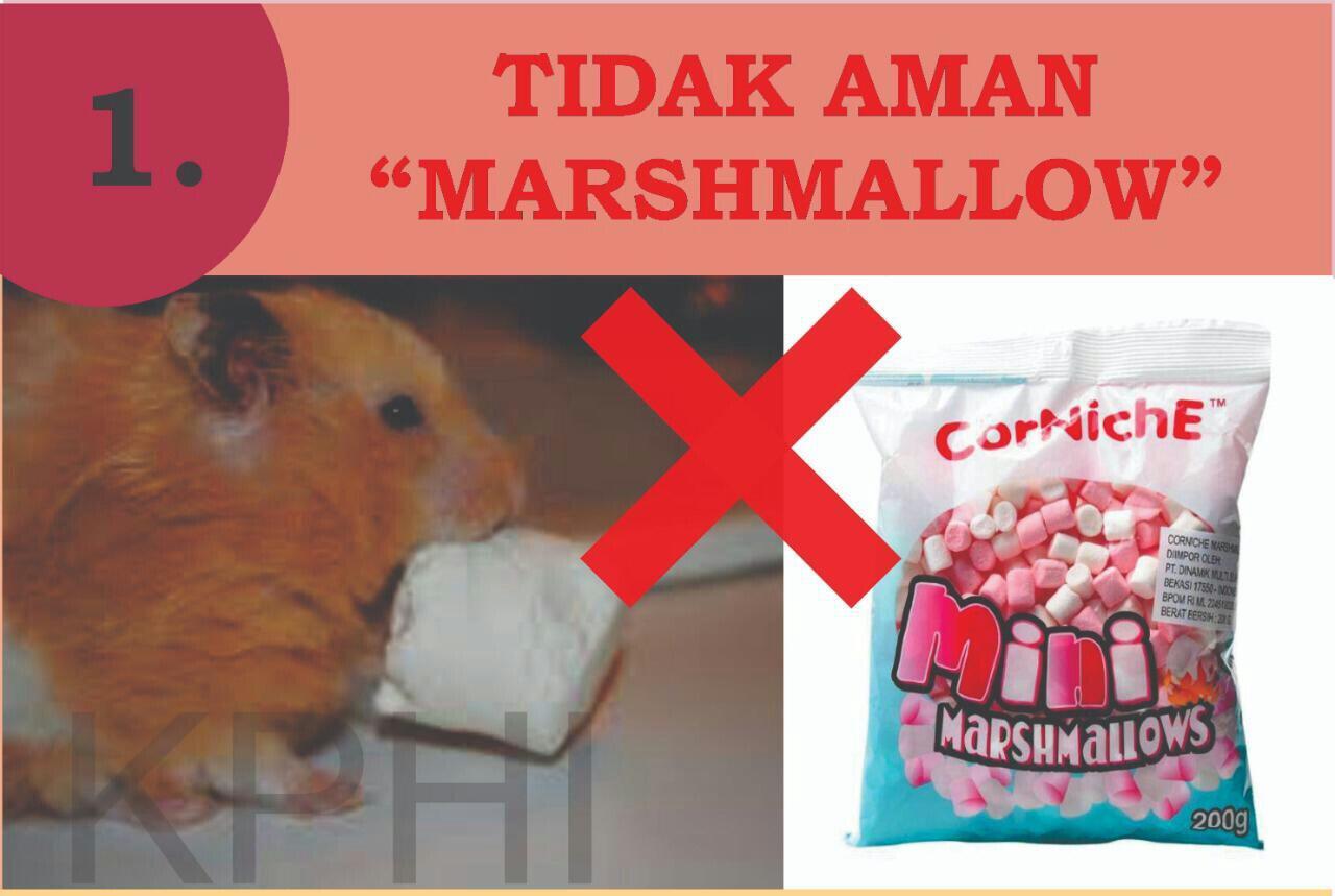 INFO PENTING! Cemilan Yang Dilarang Untuk Konsumsi Hamster