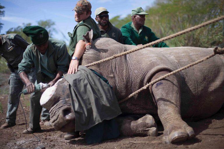 Manusia Jadi Spesies Paling Berbahaya Di Muka Bumi Ini