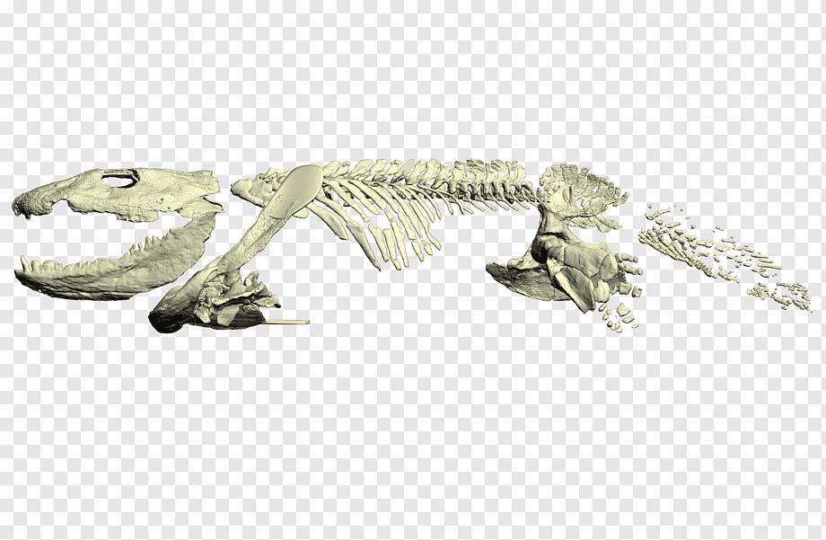 Ichthyostega, Amfibi Sekaligus Hewan Pertama Yang Menginjakkan Kaki Di Daratan Bumi!