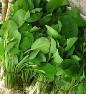 7 Tanaman Ini Bisa untuk Topping Sayuran Pelengkap Olahan Mie, Selain Kobis dan Sawi