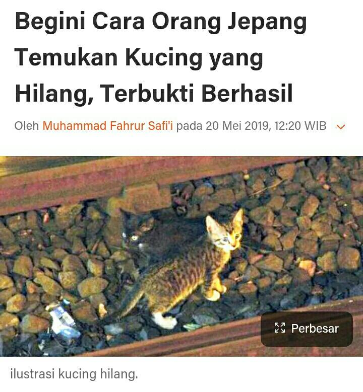 Kucingmu hilang? Pakailah Cara Unik ini Untuk Mencari Kucing yang Hilang