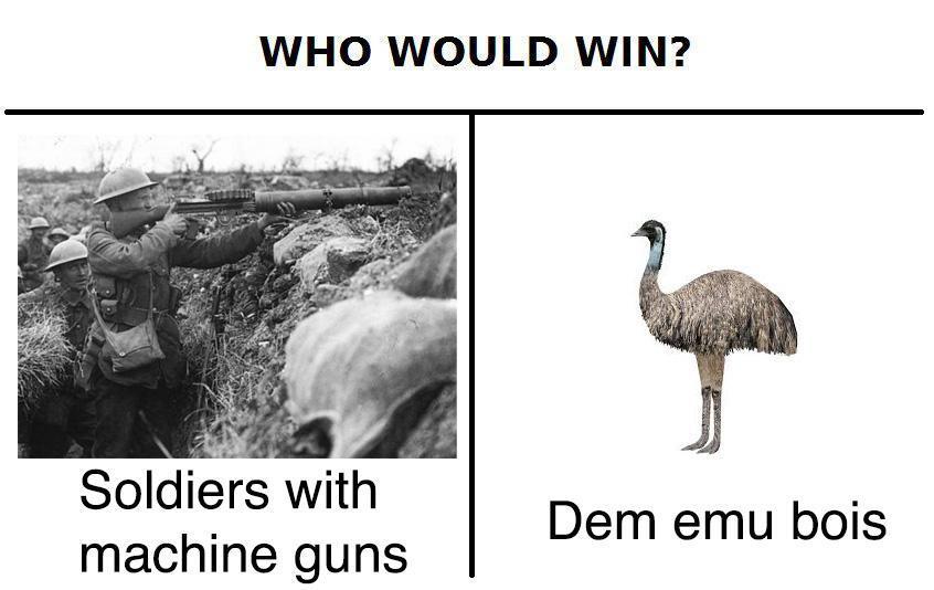 Great Emu War! Perang Antara Australia VS 20000 Burung Emu!